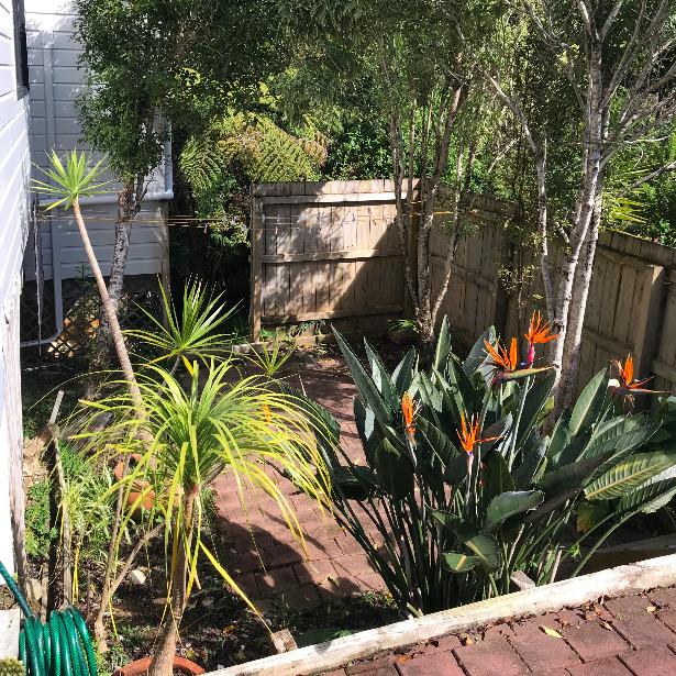 jardin NZ