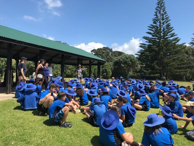 long bay discours NZ